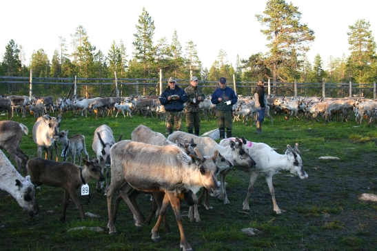 The Sami people of Finland - one of the IPCCA Local Assessment case studies