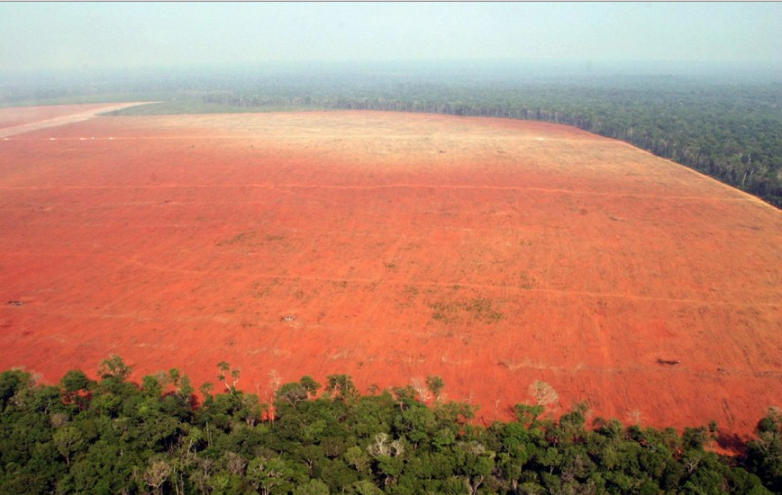 environment essay the devastation of deforestation This free environmental studies essay on deforestation is the permanent devastation of native forests and cheapest essay service: essays about deforestation.